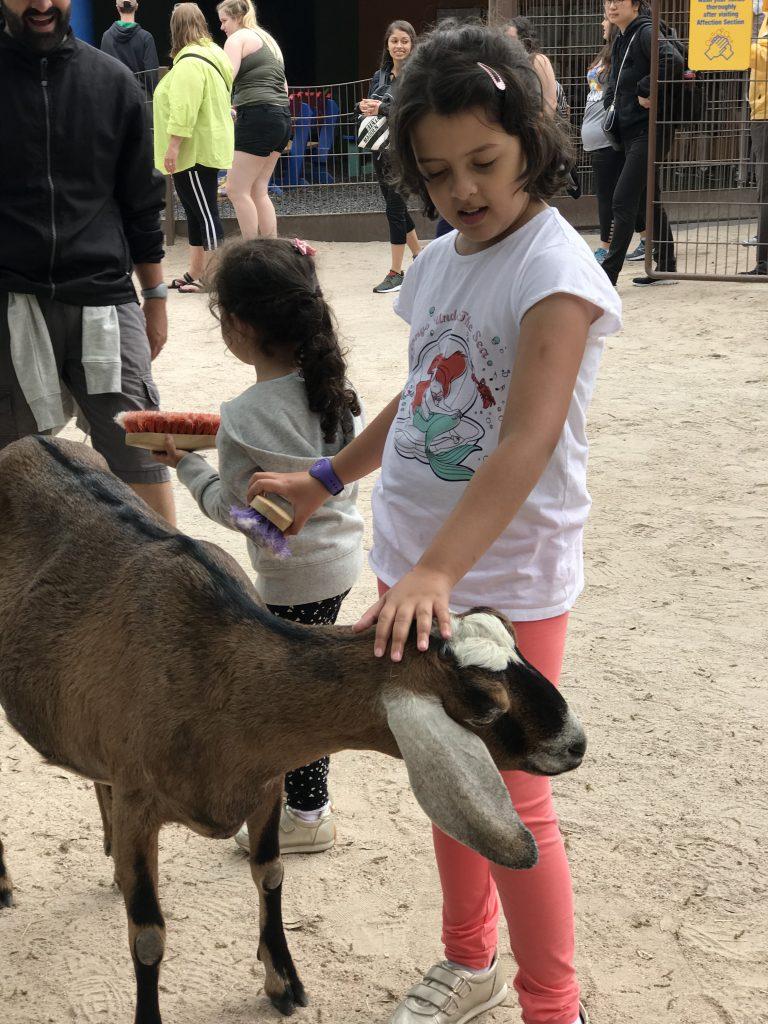 dicas disney com crianças animal kingdom